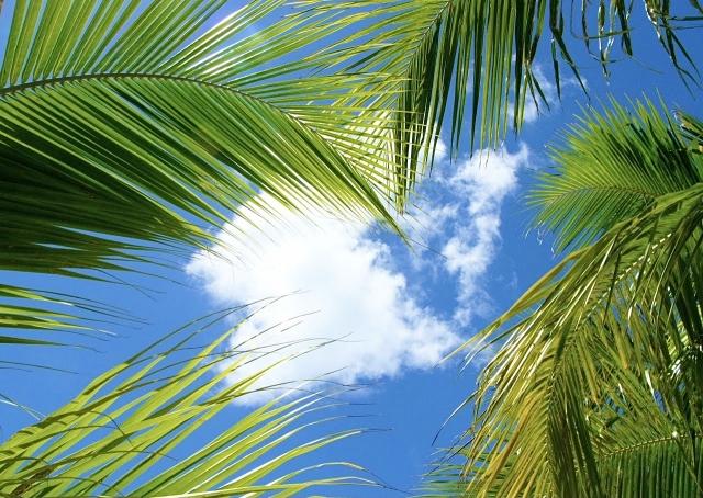 ヤシの木と青空画像